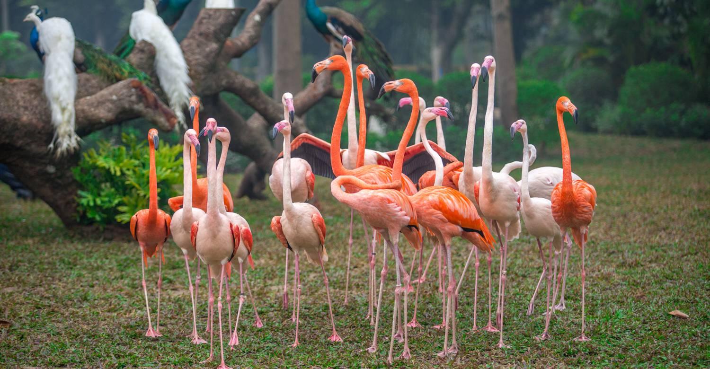 广州长隆飞鸟乐园-